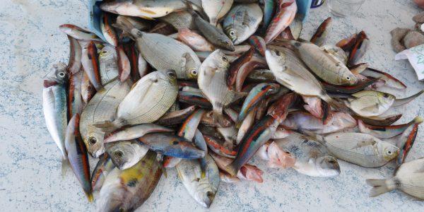 Concours de pêche – Juin 2014