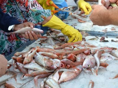 Concours de pêche Canotiers marseillais Juin 2012